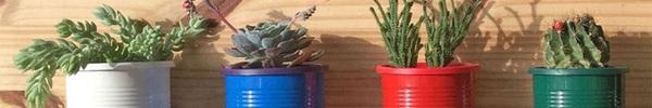 Trồng rau gia vị cực nhàn với những chậu cây thông minh trong căn bếp