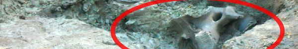 Thấy hòn đá kỳ lạ trong vườn, cả gia đình đào lên mới tá hỏa phát hiện ra thứ ẩn giấu bên dưới