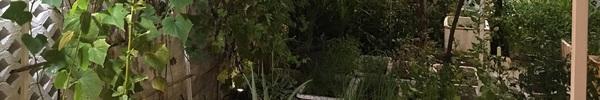 Vườn rau sạch trong biệt thự triệu đô xanh mướt của vợ chồng Thủy Tiên - Công Vinh