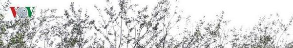 Ảnh: Kinh hoàng rừng cây treo đầy rác ở Thanh Hóa