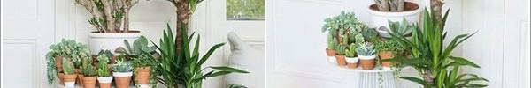 Trang trí nhà với bồn cây - giải pháp tiết kiệm nhưng khiến nhà đẹp bất ngờ