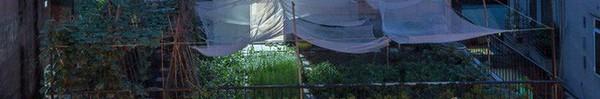 Ngôi nhà nhìn đâu cũng thấy cây xanh và có hẳn một vườn rau trên sân thượng cực rộng ở Hà Nội
