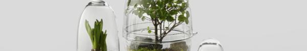 Những thiết kế tiểu cảnh Terrariums hình quả trứng gây thương nhớ cho bất kỳ ai khi ngắm nhìn
