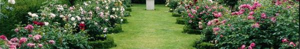 """Khu vườn hoa hồng đẹp hơn cổ tích của người đàn ông được phong danh là """"Vĩ nhân hoa hồng của thế giới"""""""