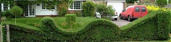 Gợi ý trang trí vườn xinh bằng cây cảnh nghệ thuật