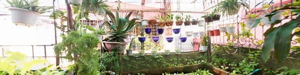 Khu vườn 30m² ngập tràn rau xanh trên sân thượng ở Hà Nội