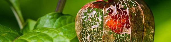 Những giống củ quả kỳ lạ nhưng cực kỳ dễ trồng