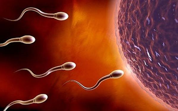 4 tuần đầu tiên của thai kì em bé phát triển như nào?