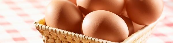 Cho con ăn trứng một cách khoa học nhất 2