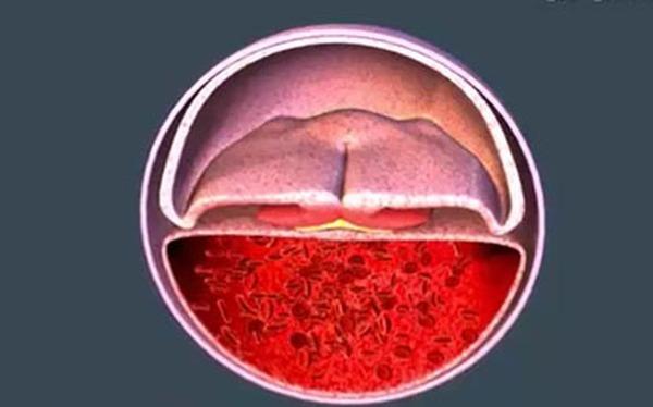Sự hình thành phôi thai và các bộ phận trên cơ thể bé