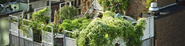Những khu vườn trên sân thượng giữa thành phố khiến hàng xóm phát thèm
