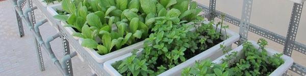 3 phương thức trồng rau tại nhà đơn giản, hiệu quả cho chị em