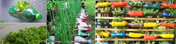 Cách tận dụng chai nhựa để trồng những vườn rau xanh mướt mát ở nhà phố