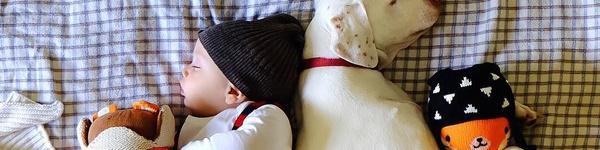 Những em bé khiến trái tim triệu người rung động vì chụp ảnh tuyệt đẹp với thú cưng