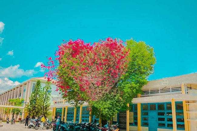Cây hoa giấy có hình trái tim  - Ảnh 2.