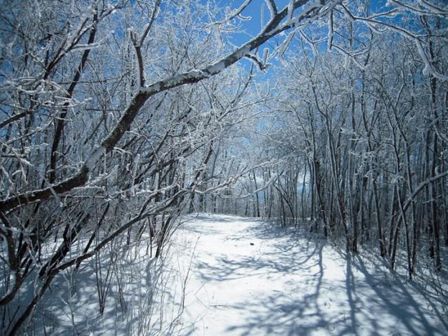 """Khung cảnh đẹp đến phát hờn của """"Frozen"""" trong đời thực - Ảnh 2."""