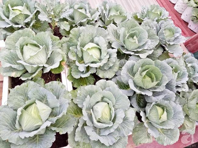 Mê mẩn vườn rau xanh mướt trên sân thượng 40m² với chi phí 7 triệu đồng của người chồng chiều vợ - Ảnh 2.
