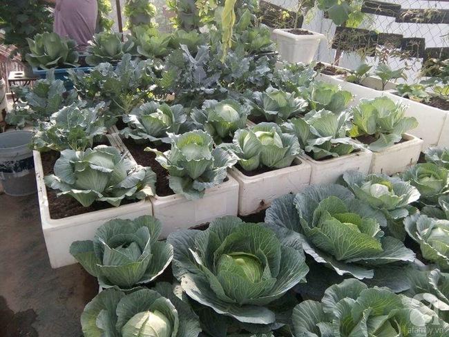Mê mẩn vườn rau xanh mướt trên sân thượng 40m² với chi phí 7 triệu đồng của người chồng chiều vợ - Ảnh 3.