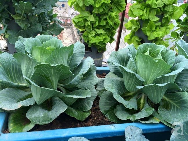 Mê mẩn vườn rau xanh mướt trên sân thượng 40m² với chi phí 7 triệu đồng của người chồng chiều vợ - Ảnh 6.
