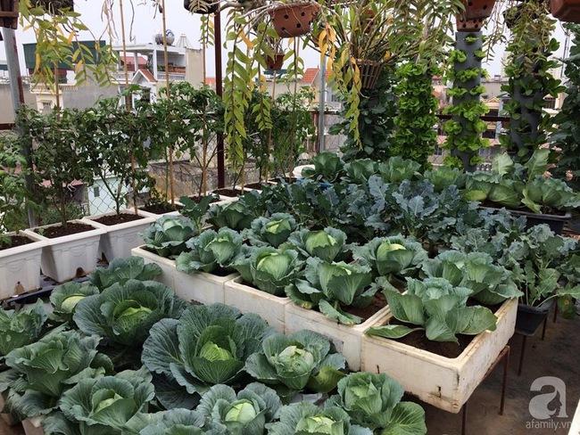 Mê mẩn vườn rau xanh mướt trên sân thượng 40m² với chi phí 7 triệu đồng của người chồng chiều vợ - Ảnh 7.