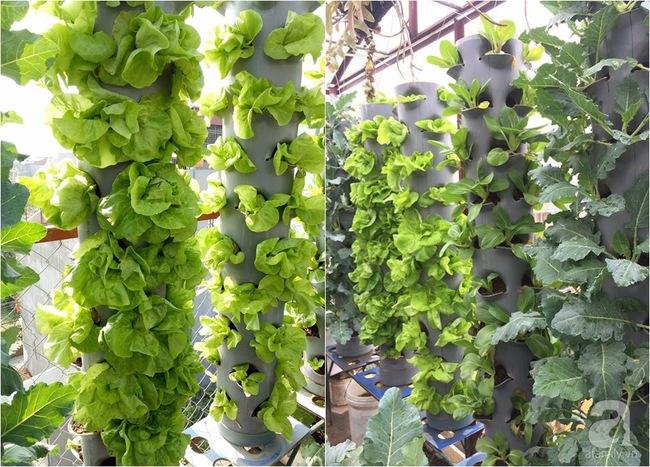 Mê mẩn vườn rau xanh mướt trên sân thượng 40m² với chi phí 7 triệu đồng của người chồng chiều vợ - Ảnh 8.