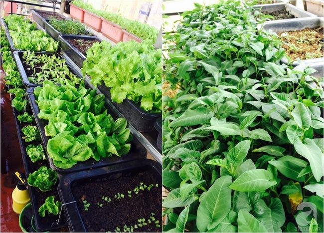 Mê mẩn vườn rau xanh mướt trên sân thượng 40m² với chi phí 7 triệu đồng của người chồng chiều vợ - Ảnh 9.