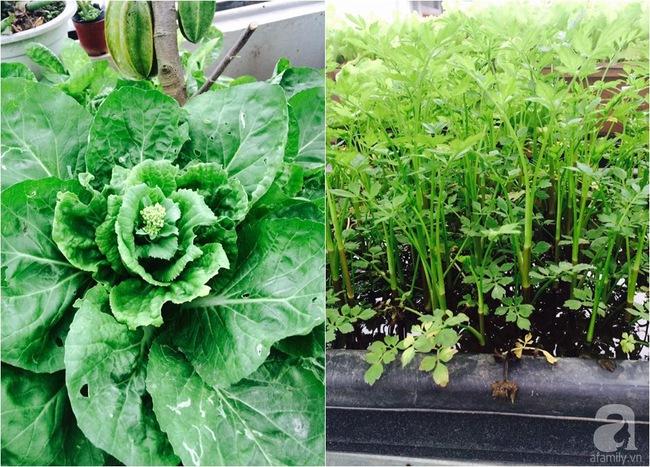 Mê mẩn vườn rau xanh mướt trên sân thượng 40m² với chi phí 7 triệu đồng của người chồng chiều vợ - Ảnh 11.
