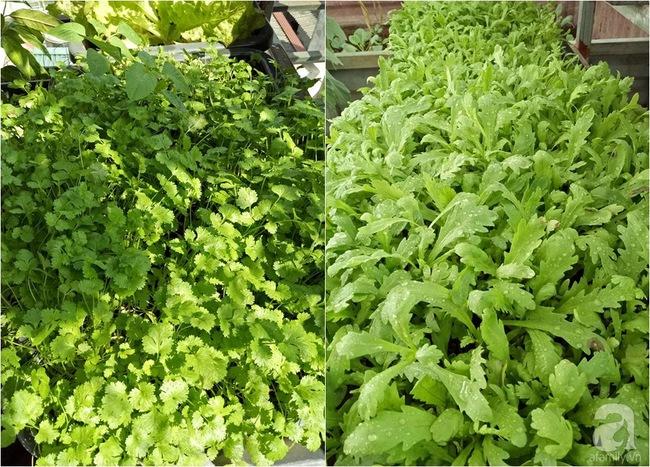 Mê mẩn vườn rau xanh mướt trên sân thượng 40m² với chi phí 7 triệu đồng của người chồng chiều vợ - Ảnh 13.