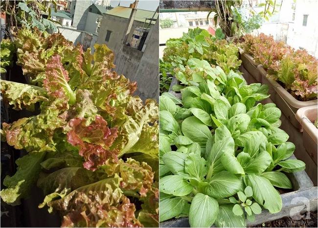 Mê mẩn vườn rau xanh mướt trên sân thượng 40m² với chi phí 7 triệu đồng của người chồng chiều vợ - Ảnh 17.