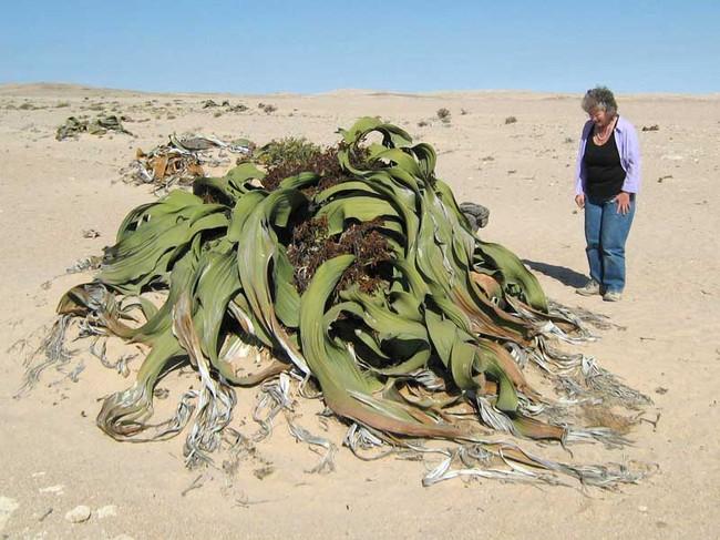 Những loài thực vật kỳ lạ và đáng sợ nhất thế giới - Ảnh 2.