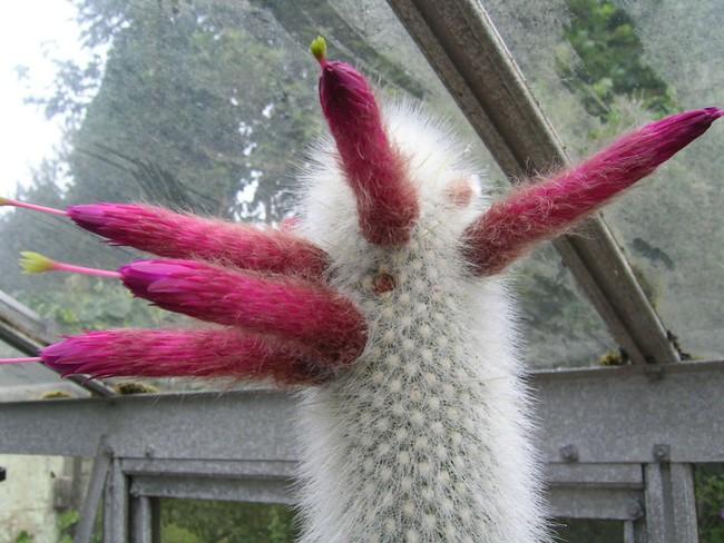 Những loài thực vật kỳ lạ và đáng sợ nhất thế giới - Ảnh 3.