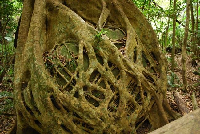 Những loài thực vật kỳ lạ và đáng sợ nhất thế giới - Ảnh 8.