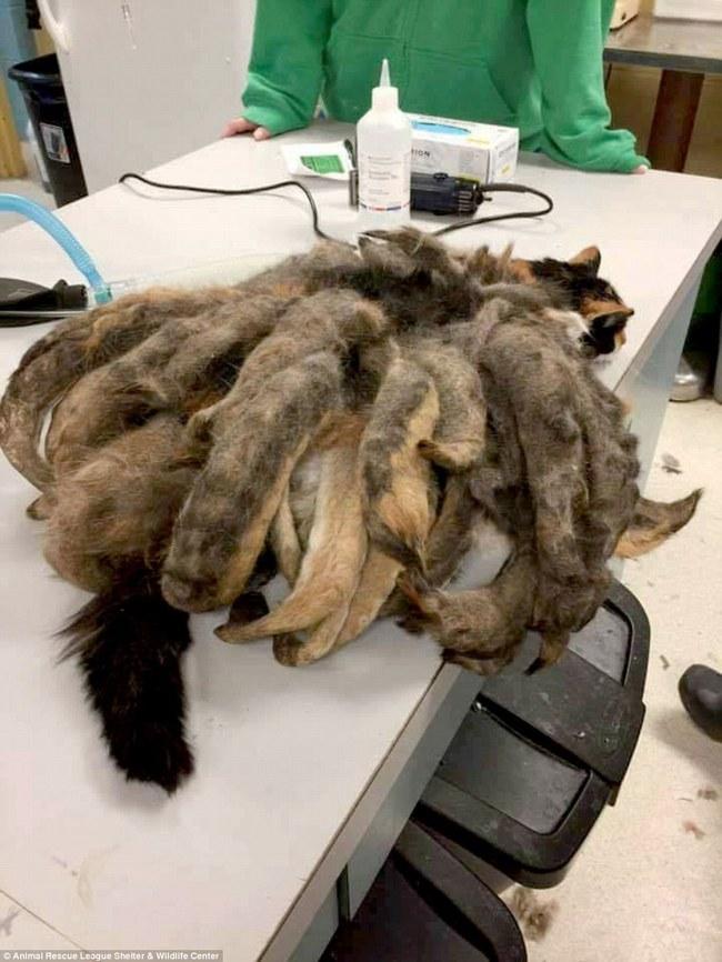 Con mèo có bộ lông như bạch tuộc khiến bạn không thể tin nổi đấy là mèo - Ảnh 3.