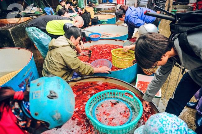 Cận cảnh chợ cá chép phục vụ Tết ông Công, ông Táo lớn nhất tại Hà Nội - Ảnh 1.
