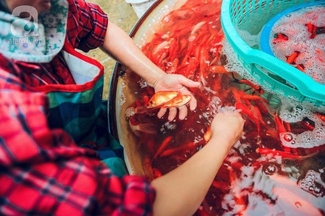 Cận cảnh chợ cá chép phục vụ Tết ông Công, ông Táo lớn nhất tại Hà Nội - Ảnh 2.