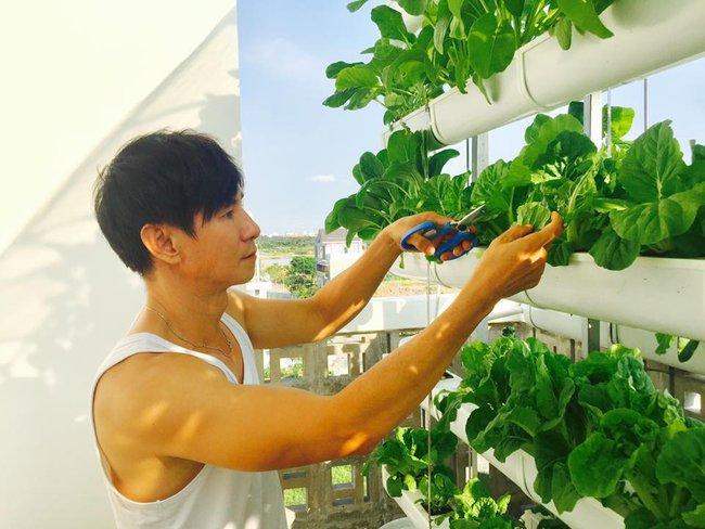 Khu vườn trên sân thượng xanh mướt mát, ăn mãi chẳng hết rau sạch của gia đình Lý Hải - Minh Hà - Ảnh 16.