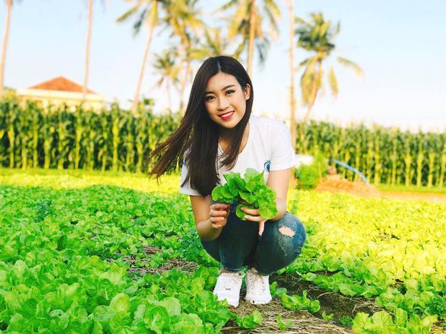 """13 1491984812520 - Hoa hậu Mỹ Linh """"mách"""" hàng loạt món ăn vặt ngon, giá chỉ từ 3000đ ở xứ """"hoa vàng cỏ xanh"""""""
