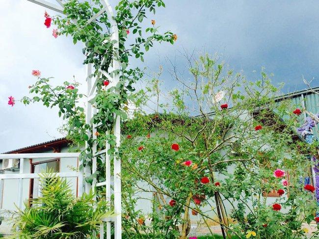 Ngôi nhà bé xinh, bình yên bên vườn hồng rực rỡ cách Hà Nội hơn 1 giờ đi ô tô - Ảnh 4.
