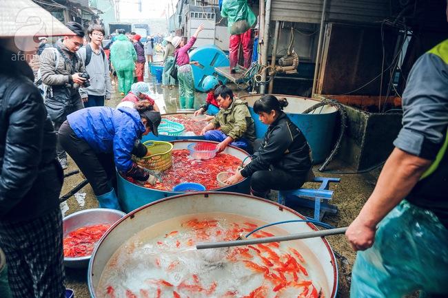 Cận cảnh chợ cá chép phục vụ Tết ông Công, ông Táo lớn nhất tại Hà Nội - Ảnh 3.
