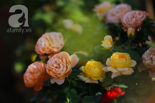 Cô gái khởi nghiệp bằng vườn hoa hồng, doanh thu tiền tỷ: Thế hệ tôi, làm thuê là khái niệm quá cũ! - Ảnh 15.