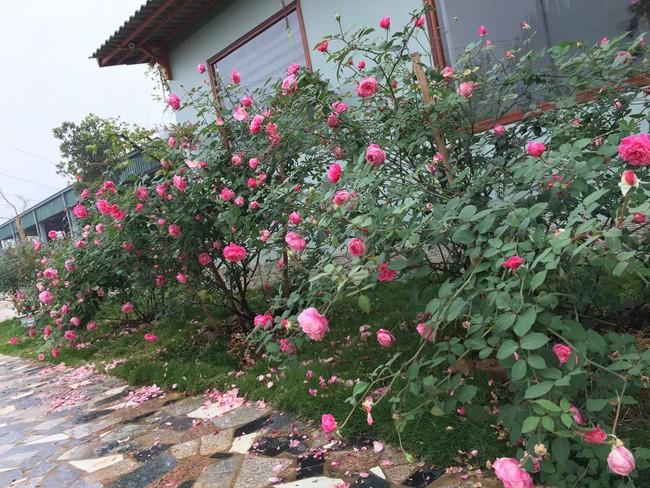 Ngôi nhà bé xinh, bình yên bên vườn hồng rực rỡ cách Hà Nội hơn 1 giờ đi ô tô - Ảnh 13.