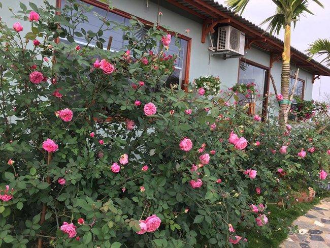 Ngôi nhà bé xinh, bình yên bên vườn hồng rực rỡ cách Hà Nội hơn 1 giờ đi ô tô - Ảnh 16.