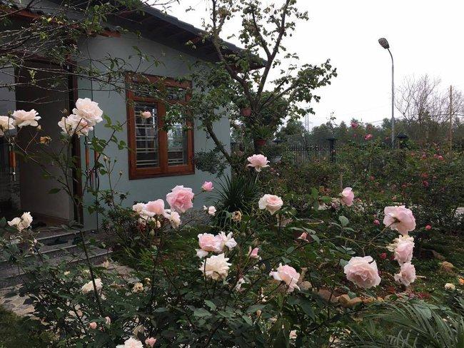 Ngôi nhà bé xinh, bình yên bên vườn hồng rực rỡ cách Hà Nội hơn 1 giờ đi ô tô - Ảnh 14.