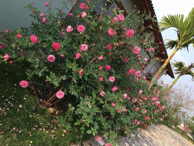Ngôi nhà bé xinh, bình yên bên vườn hồng rực rỡ cách Hà Nội hơn 1 giờ đi ô tô - Ảnh 8.