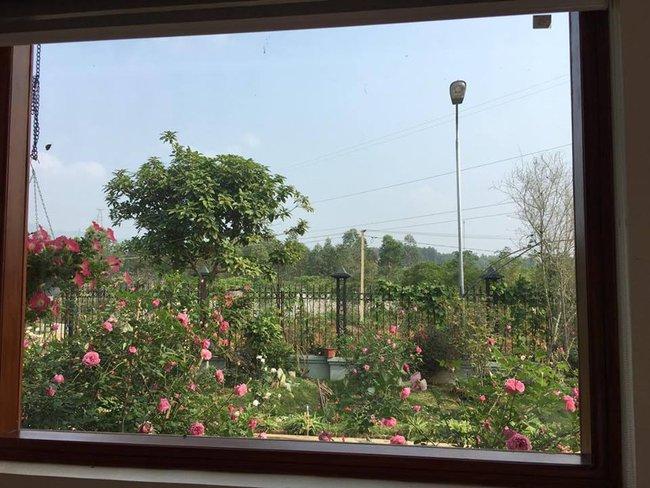 Ngôi nhà bé xinh, bình yên bên vườn hồng rực rỡ cách Hà Nội hơn 1 giờ đi ô tô - Ảnh 7.