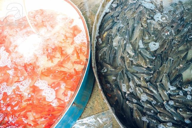 Cận cảnh chợ cá chép phục vụ Tết ông Công, ông Táo lớn nhất tại Hà Nội - Ảnh 4.