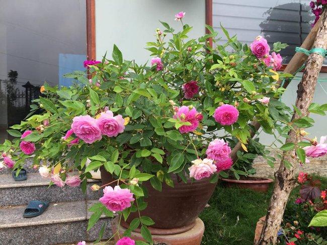 Ngôi nhà bé xinh, bình yên bên vườn hồng rực rỡ cách Hà Nội hơn 1 giờ đi ô tô - Ảnh 15.