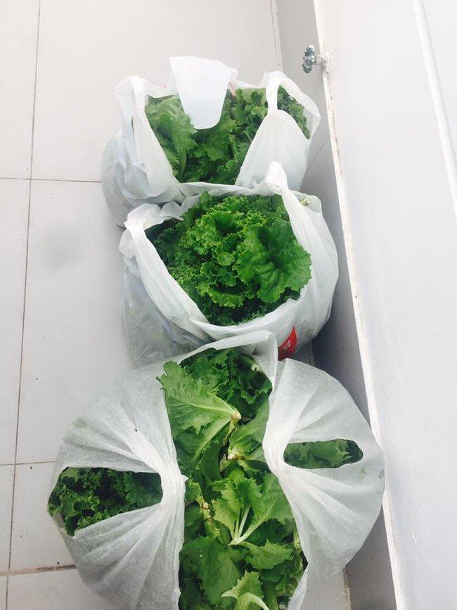 Khu vườn trên sân thượng xanh mướt mát, ăn mãi chẳng hết rau sạch của gia đình Lý Hải - Minh Hà - Ảnh 20.