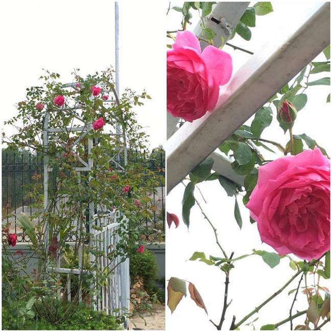 Ngôi nhà bé xinh, bình yên bên vườn hồng rực rỡ cách Hà Nội hơn 1 giờ đi ô tô - Ảnh 3.