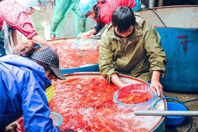 Cận cảnh chợ cá chép phục vụ Tết ông Công, ông Táo lớn nhất tại Hà Nội - Ảnh 7.